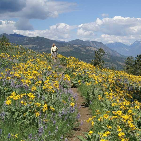 Hiking through spring flowers