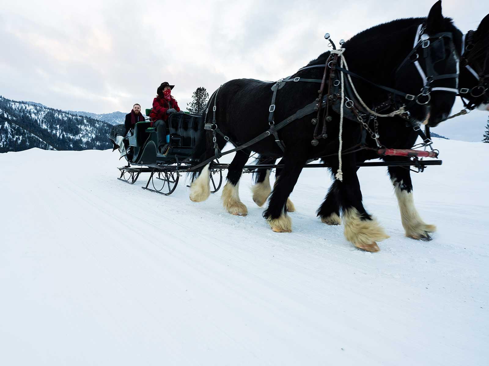 Allison Chris wedding sleigh ride